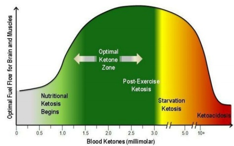 on-ketosis-the-special-metabolic-state