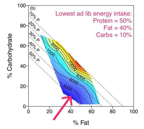 High Vs Low Energy Foods Vitamin E